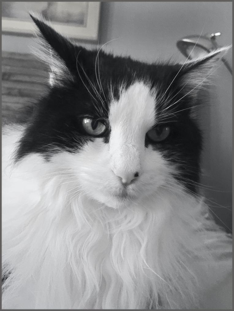 Sweet Felix. Interesting cat.